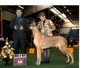 Hawk Award of Merit at Westminster 2014 (1)